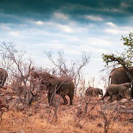 Lunchtime voor de olifanten van Ineke Huizing