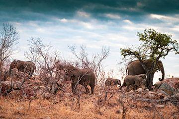Mittagspause für die Elefanten von Ineke Huizing