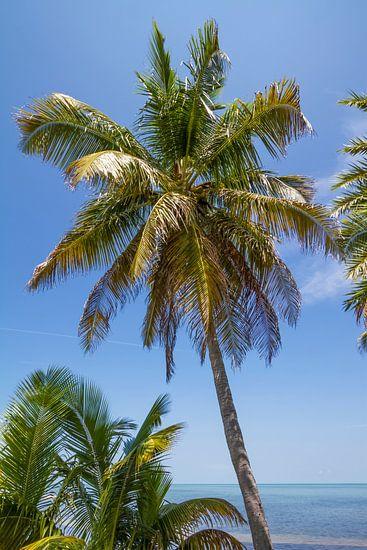 FLORIDA KEYS Palm Tree Ocean View van Melanie Viola