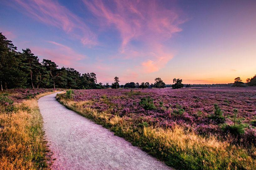 De nederlandse veluwe, met de prachtige hei in bloei van Martijn Bravenboer