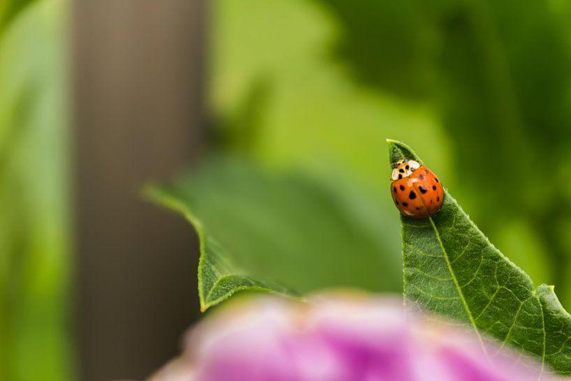 Lieveheersbeestje naar de top von Michel Vedder Photography