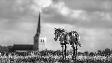Paard in zwart/wit van