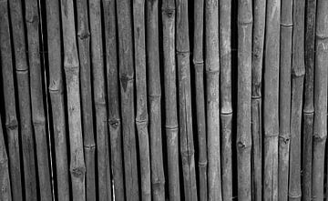 Bamboe in zwart-wit van Anne van de Beek