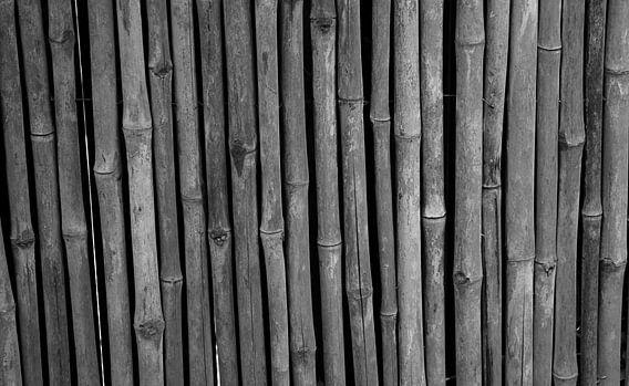 Bamboe in zwart-wit
