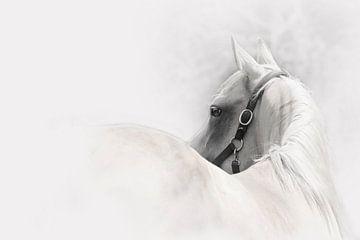 Pferd abstrakt von Studio Nooks