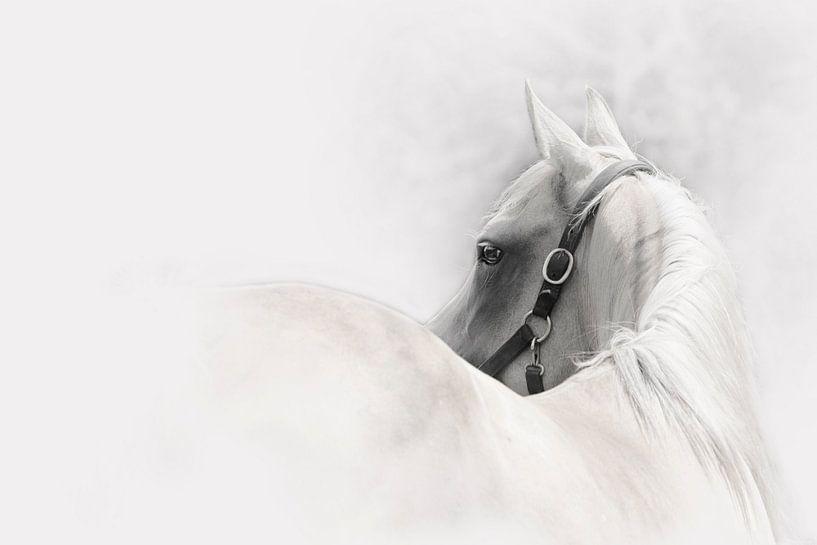 cheval abstract sur Studio Nooks