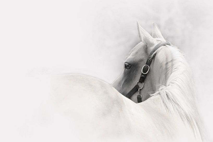 Palamino Horse van Meg Branca