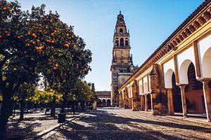 Cordoba – Mezquita / Patio de los Naranjos