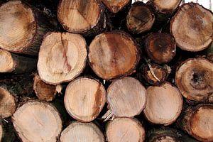 Boomstammen Wood van