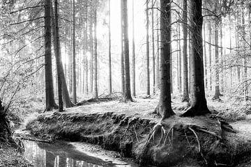 Wald in schwarzweiß von Günter Albers