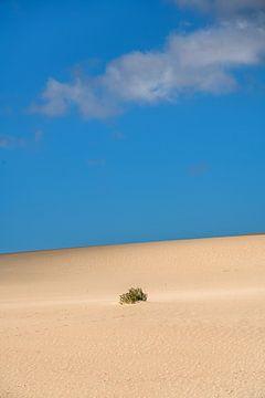 Struikje in een duinenlandschap met een lichte wolkenlucht van