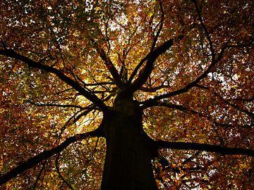 Herfst van Paolo Gant