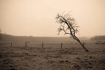 Kahlkopfbaum in Wiesenlandschaft von Idema Media