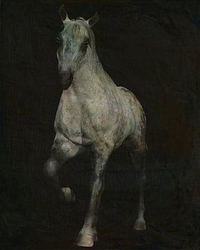 cheval sortant des ténèbres