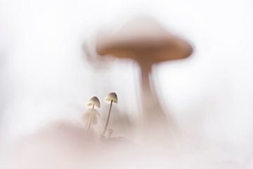 Small things van Bob Daalder