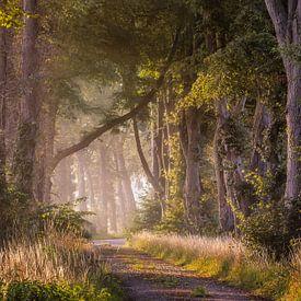 Magisch bospad van Patrick Rodink