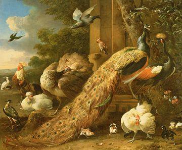 Pauw, parkiet, pelikaan, kraanvogel en pluimvee, Melchior d'Hondecoeter