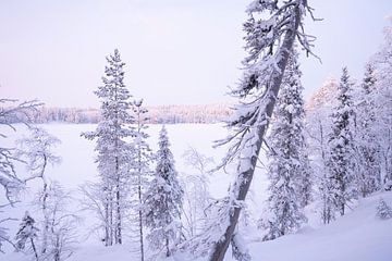 Gefrorener See in Lappland von elma maaskant