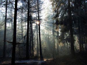 Winterochtend in het Baarnse Bos van