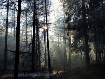 Winterochtend in het Baarnse Bos sur Hilde van den Berg