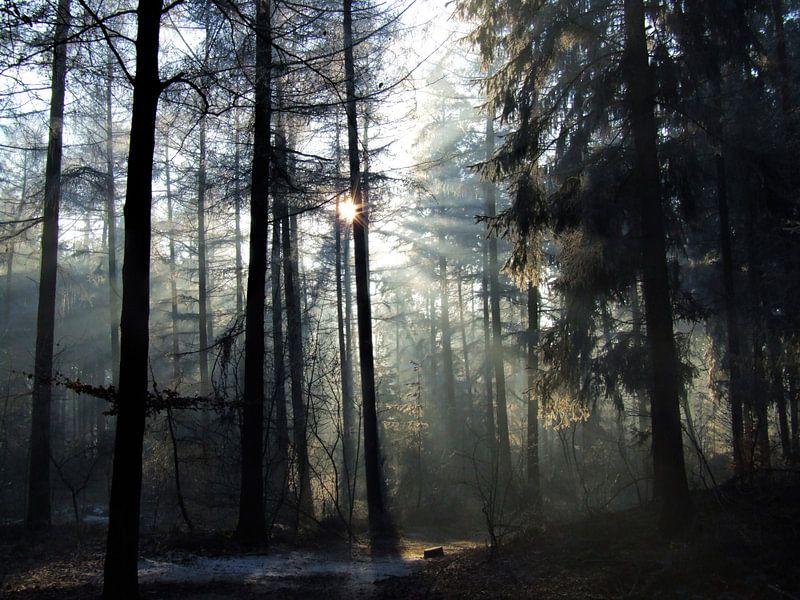 Winterochtend in het Baarnse Bos van Hilde van den Berg