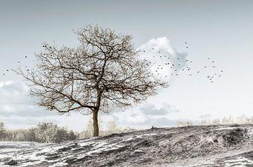 Paysage d'hiver sur Hannie Kassenaar