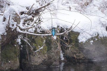 Kingfisher von Julia Schellig