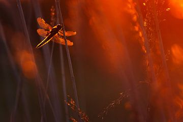 Dragonfly in Red sur Pim Leijen
