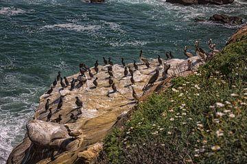 Pelikanen op een rotsachtige kustlijn met de oceaan op de achtergrond van Mohamed Abdelrazek