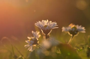 Im Sonnenlicht  van zwergl 0611