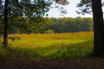 natuur in het vennengebied te Turnhout van Js photography