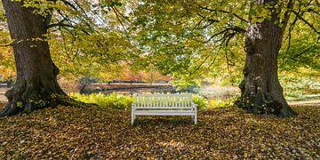 Herbstfarben im Wald von Hans Brinkel