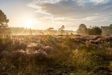 Die Veluwse Heide von Dylan Bakker