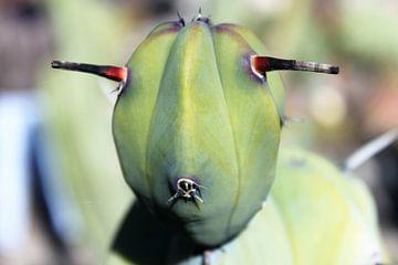 Cactus met gezicht als schaap of alien van Anna van Leeuwen