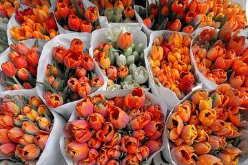 Orange Tulpen von Wendy Bos
