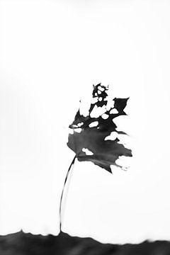 Fading Nature 11 van Pieter van Roijen