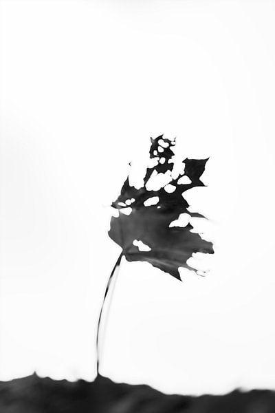 Als een blad aan een boom