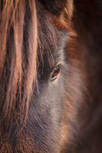 Pony van Mariette Kapitein
