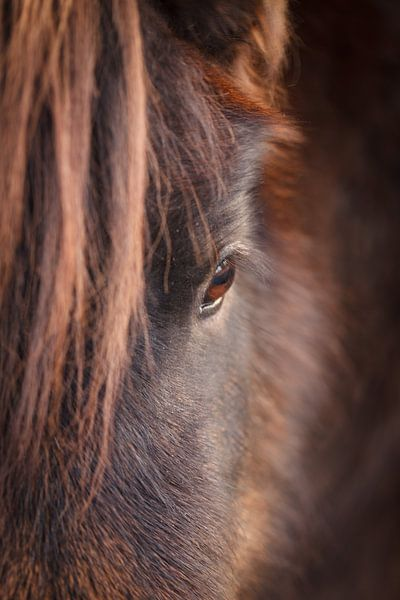 Pony sur Mariette Kapitein