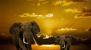 olifanten verlaten de aarde part3
