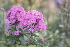 bloemen part 10 van Tania Perneel
