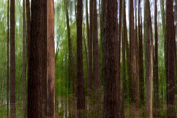 Aparte sfeer in het bos van Cathy Roels