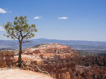 Am Abgrund, Bryce Canyon Nationalpark von Katrin May