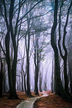 Door het bos sur Niels Barto