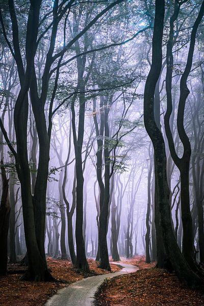 Door het bos van Niels Barto