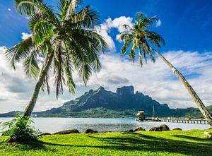 Palmbomen op Bora Bora