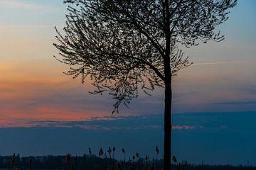 Zonsondergang achter boom van Foto Danielle
