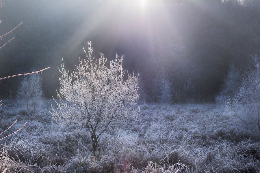 Winter boompje van Rutger Leistra