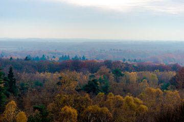Herbstlicher Wald von Kristiaan Hartmann