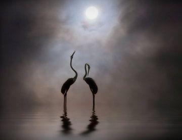 Flamingos bij zonsondergang von Marcel van Balken